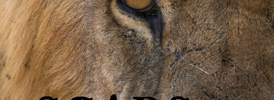 "Close up image of a lions face. Text ""Scars""."